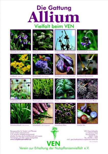 Plakat%20Allium.preview.JPG